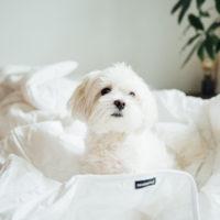 Vastuullisemmat unet: tyynyt ja peitot muovipulloista